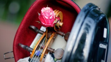 Fotografie einer pinken Rose, die aus einem Sreichinstrument liegt. Die Rose steht im Fokus, der Hintergrund ist verschwommen.